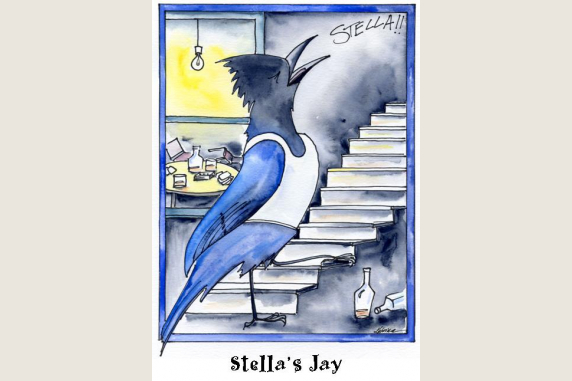 Stella's Jay note card