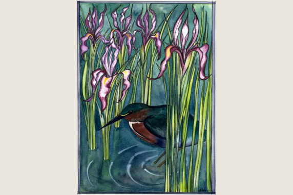 Wild Iris and Green Heron Note Card
