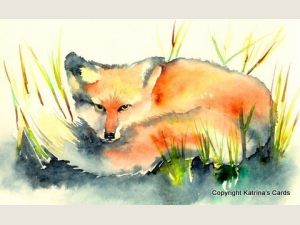 Red Fox Note Card Gift Set