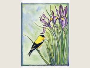 Wild Iris and Goldfinch NoteCard Gift Package