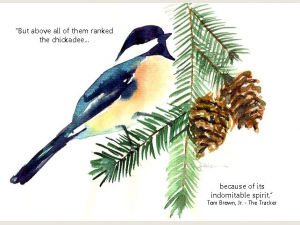 Black Capped Chickadee with quote