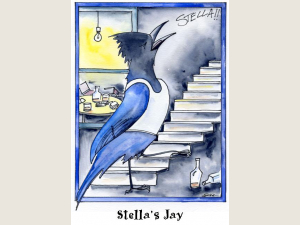 Stella's Jay Note Card Gift Set