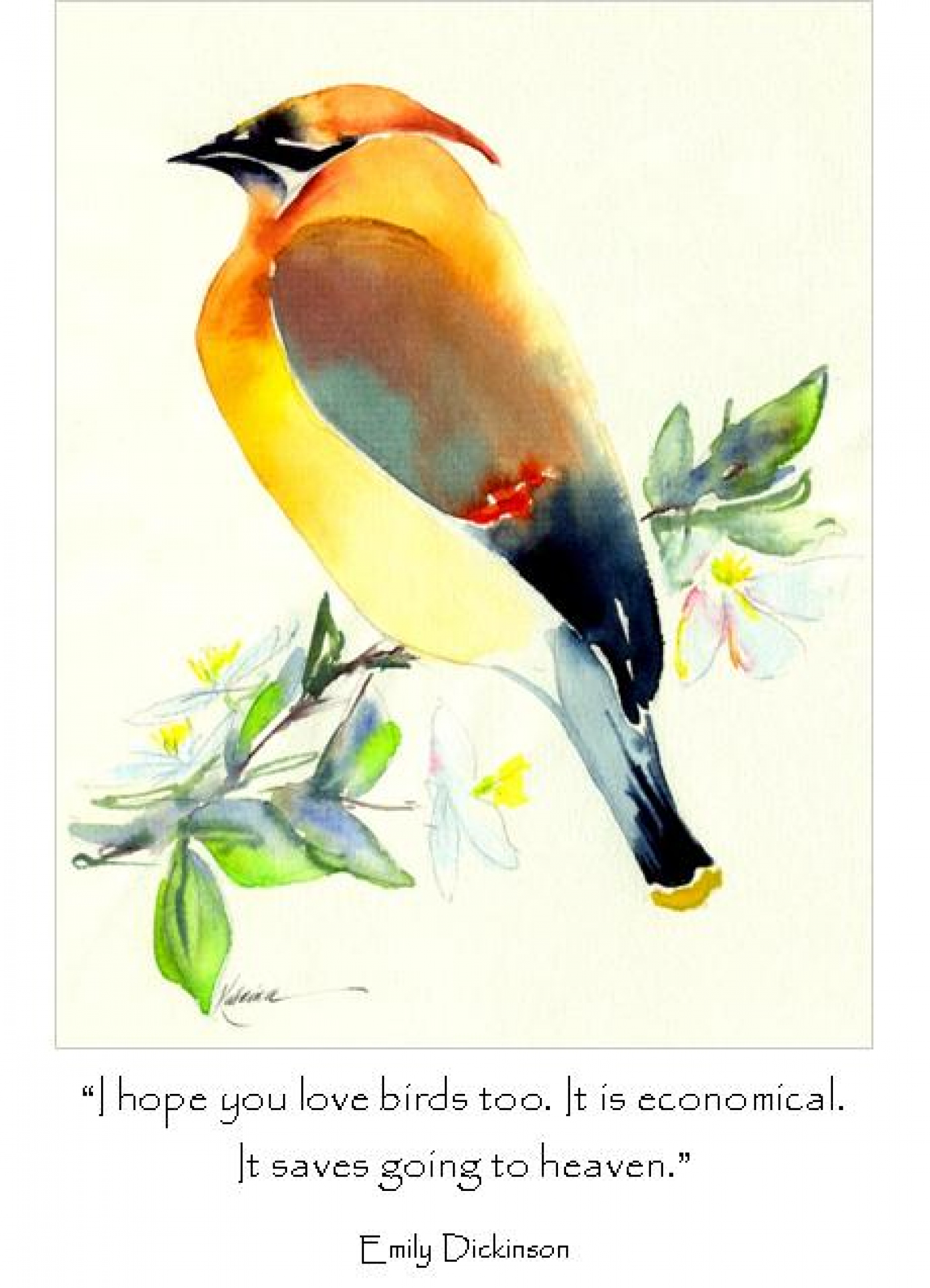 Love Bird Quotes Assorted Bird Quote Note Card Gift Set  Katrina's Cards And Gifts