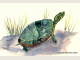 Painted Turtle totem animal note card