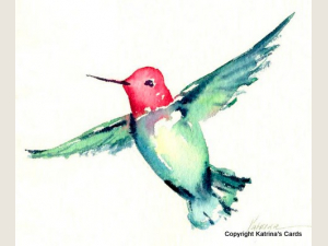Anna's Hummingbird Notecard Gift Package 5 Cards and Envelopes