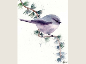 watercolor of small grey song bird perched on diagonal conifer branch