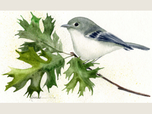watercolor painting of hutton's vireo songbird on oak branch