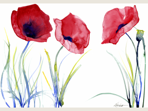 watercolor of 3 red poppies and stems with white background