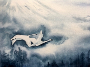 watercolor of white tundra swans in flight over forest below and mountain behind