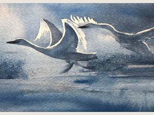 close up of watercolor painting of swans taking flight in morning light