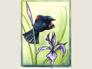 Wild Iris and Red-winged Blackbird notecard