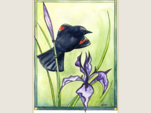 watercolor painting of red winged blackbird perched on purple iris with green