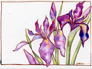 purple iris blossoms in watercolor with in drawing on white background
